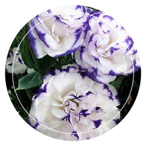 Flores Floristeria Los Nopales Las Palmas de Gran Canaria ramo de Flores regalo boda detalle